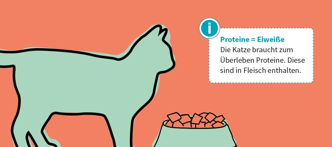 Katzen sind obligate Fleischfresser. Sie brauchen Eiweiß (=Proteine), die in Fleisch enthalten sind, zum Überleben.