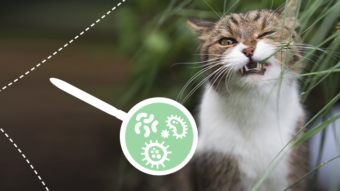 Die Verwilderung des Mikrobengartens - Mikrobiom der Katze