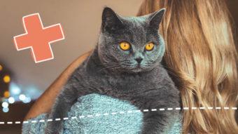 Frau mit blondem Haar hält graue Katze auf Arm. Streichelt die Katze.